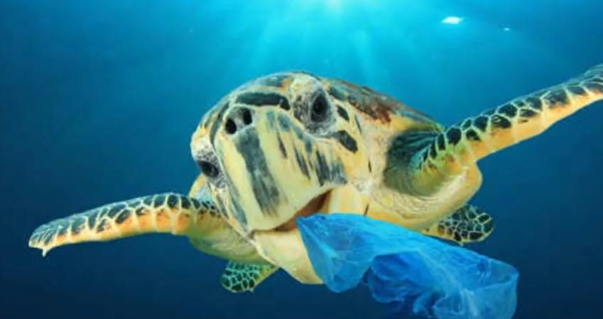 Sensibilisation sur la gestion des déchets le long des océans