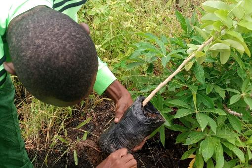 Amélioration du couvert végétale dans la ville de Parakou